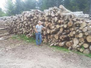 20190819-firewood-logs-jim