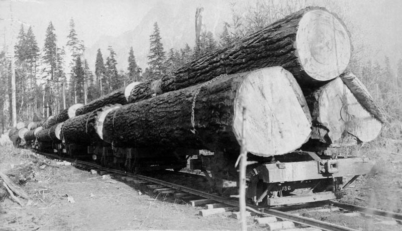 1892 Railroad flatcars loaded with logs.