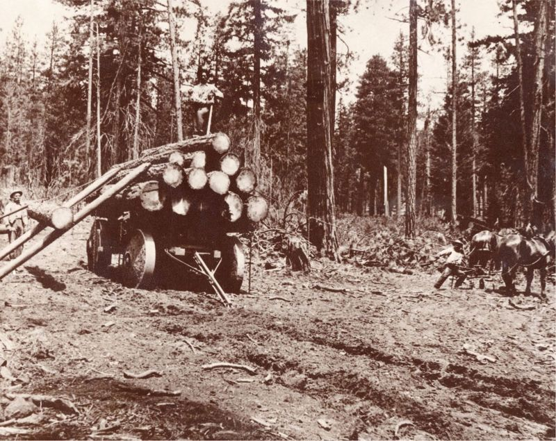 1900 Loading logs using the parbuckling method.