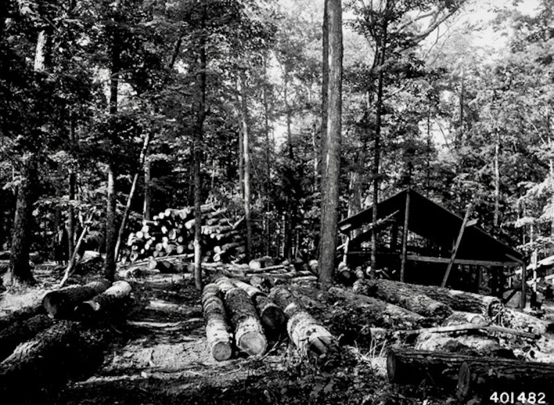 1940 portable saw mill set up in the woods.