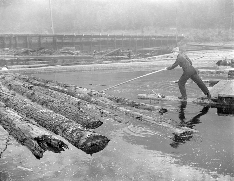 1944 Logs in sorting boom at Pacific Mills.