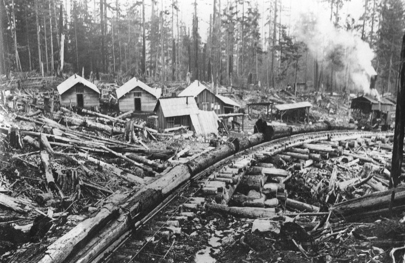 1911 McNair Fraser logging camp at Hollyburn.