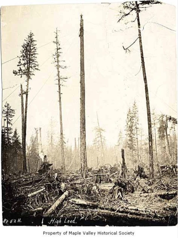 1906 High lead logging at Maple Valley.