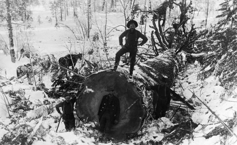 1898 Winter logging scene.