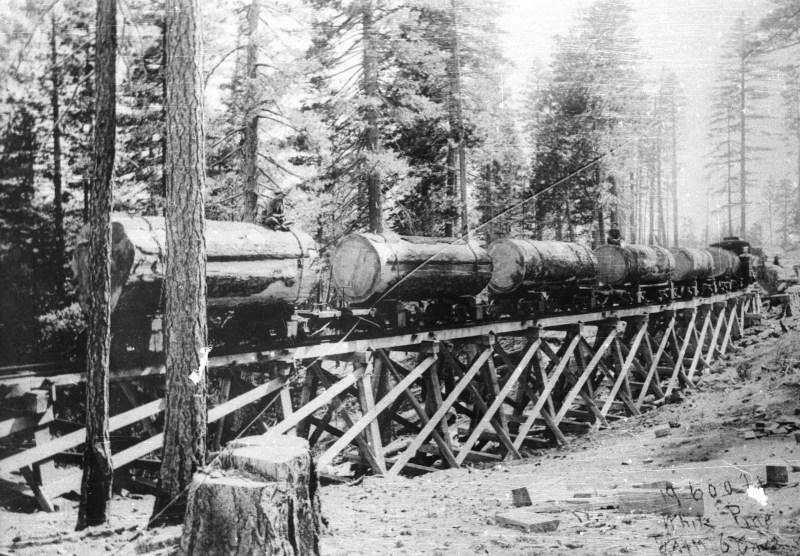 1900 19,600 ft White Pine.