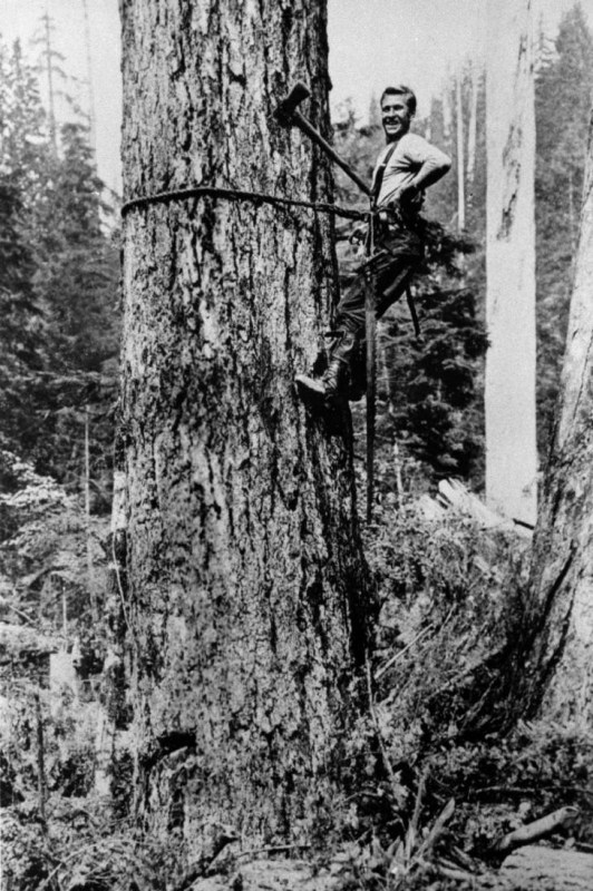 High climber with tools, British Columbia.