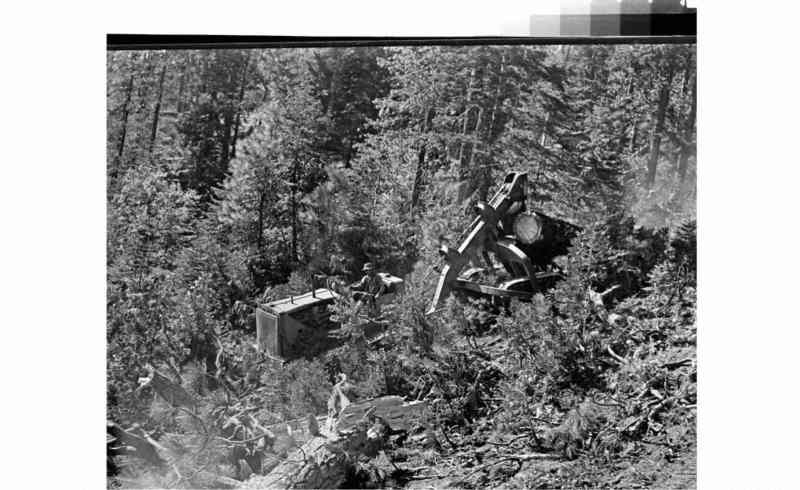 Man on log and logging truck in foreground with forest in background.