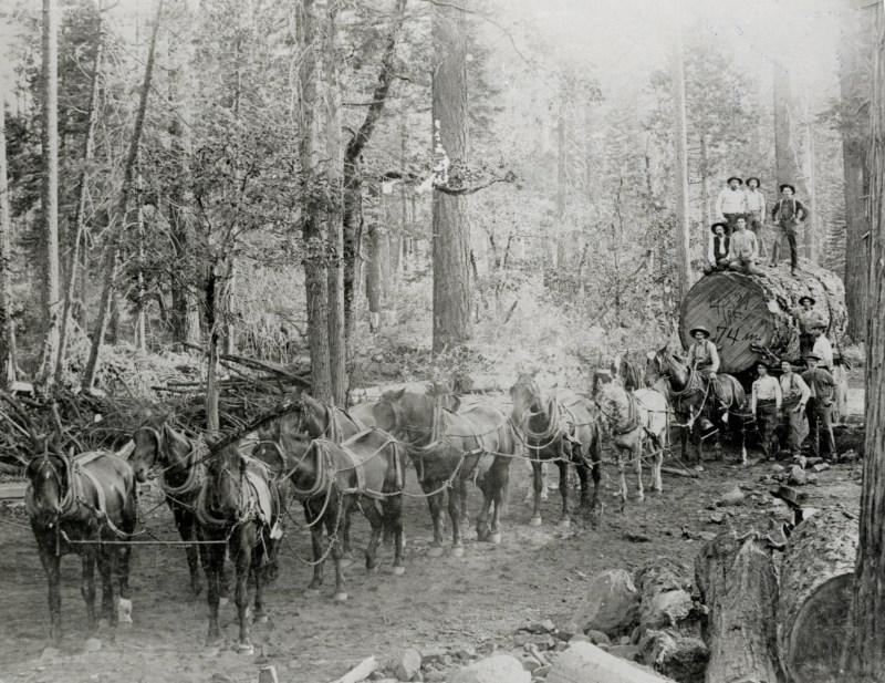 1888 Sierra Lumber Company.