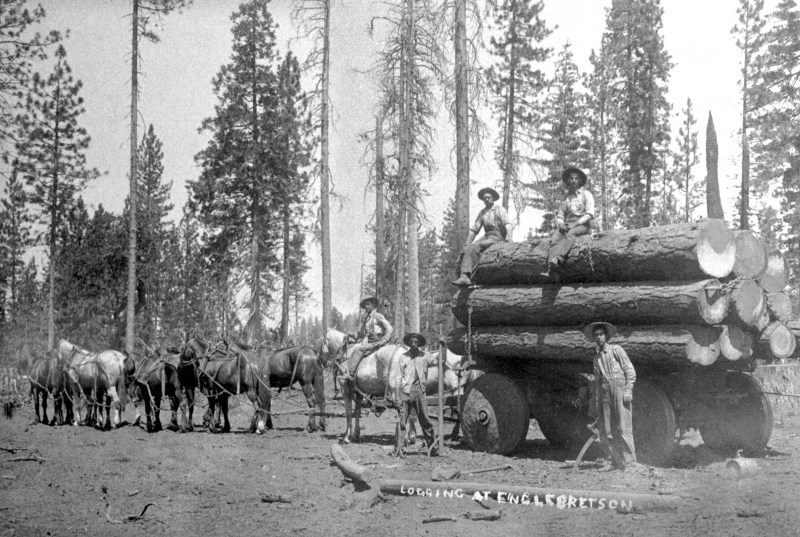1895 Draft horses pulling load of logs on rig at Englebretson Mill.