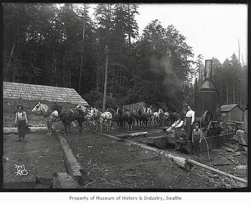 1902 14 horse team & Donkey engine with crew and family at camp.