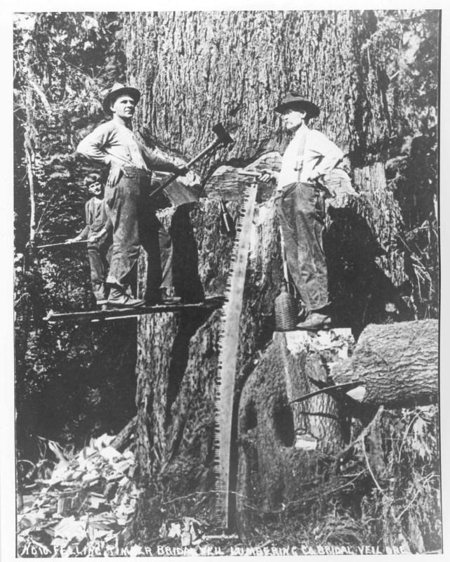 Felling timber for Bridal Veil Lumbering & Co., Bridal Veil, Oregon