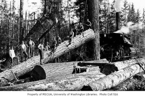 Crew at loading site with donkey engine and log rigged for loading, Schafer Brothers Logging Company, probably in Grays Harbor County.