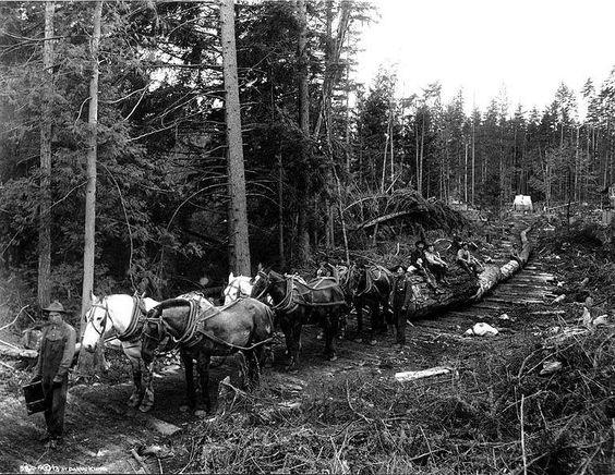1913 hauling logs on corduroy road, Washington state.