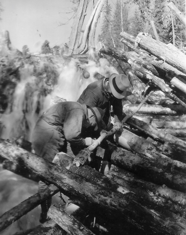 These two men are carefully preparing the dynamite that will be used to break the log-jam.