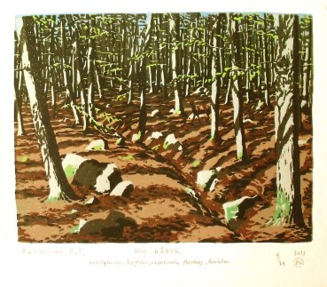 May, Roe Deer in Beech Wood, Bornholm