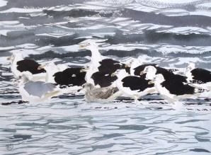 Cold, gulls