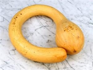 squash-rampicante