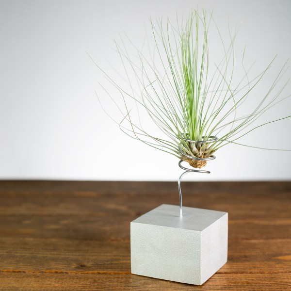 silver and gold air plant wire vase duo