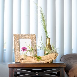 tillandsia air plant table display