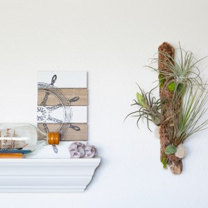 Driftwood art air plant display