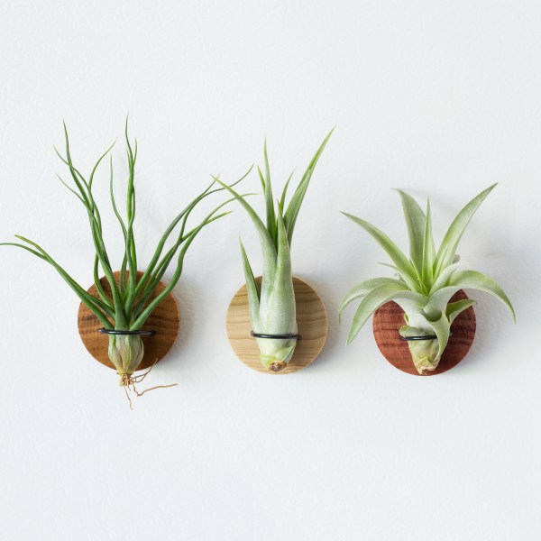 Set of 3 Round Air Plant Magnets