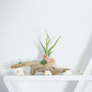 Beach Air Plant Display