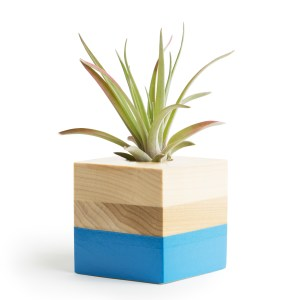 Lower Strip Air Plant Pot
