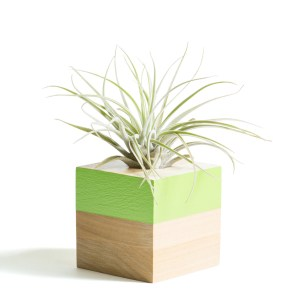 Top Strip Air Plant Display