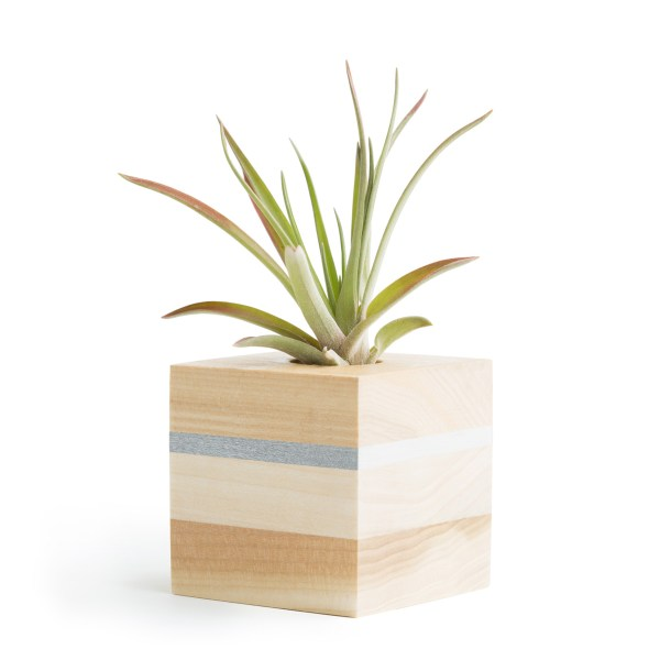 Striped Air Plant Container