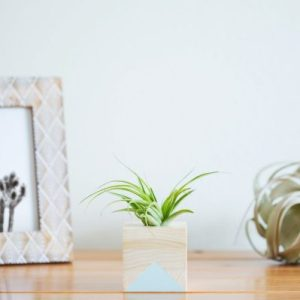 Air Plant Holders
