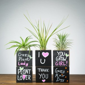 chalkboard quote air plant holder