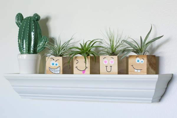 funny face air plant holders