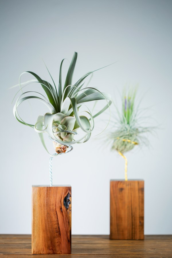 large air plant wire vase
