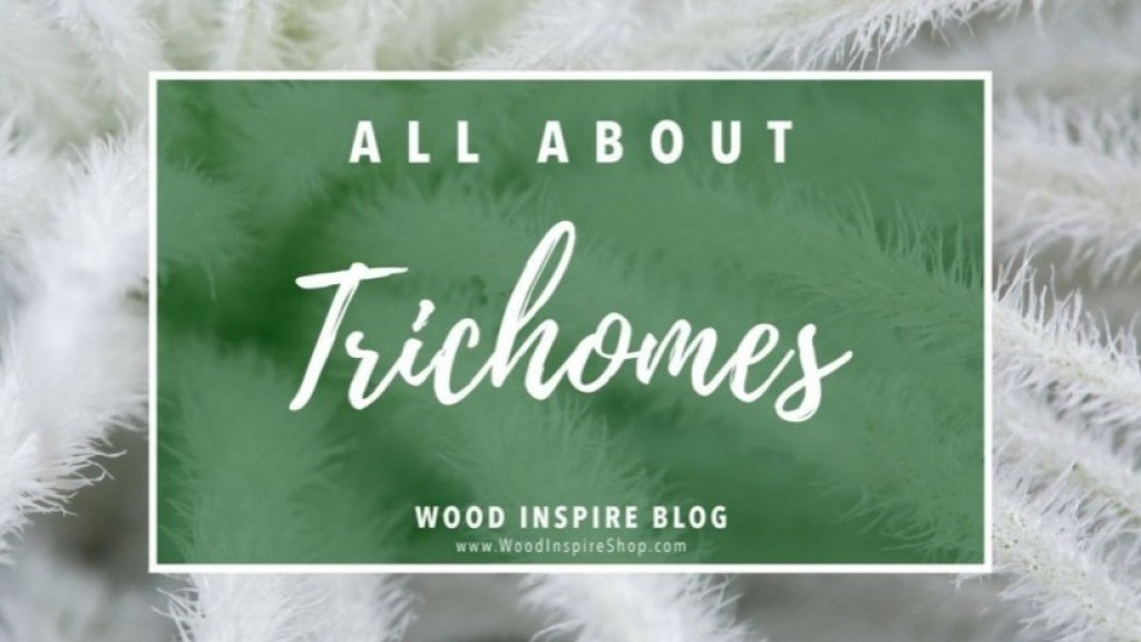 all-about-trichomes