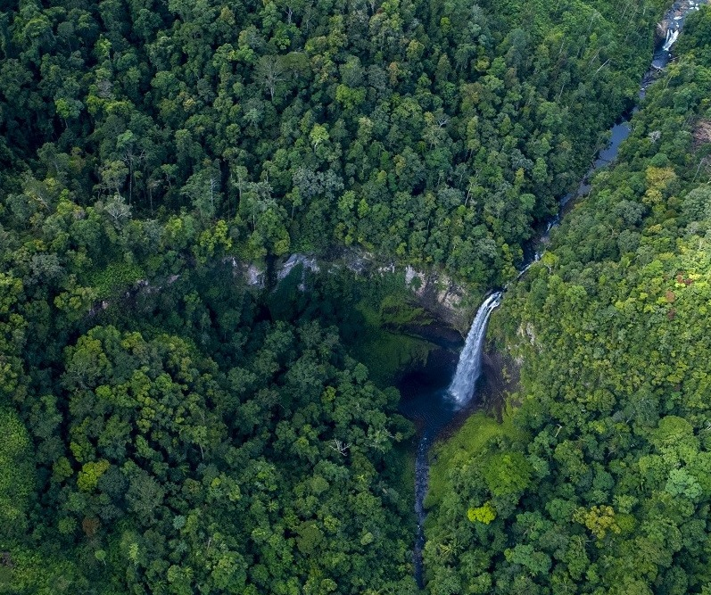 Forest from above showing waterfall