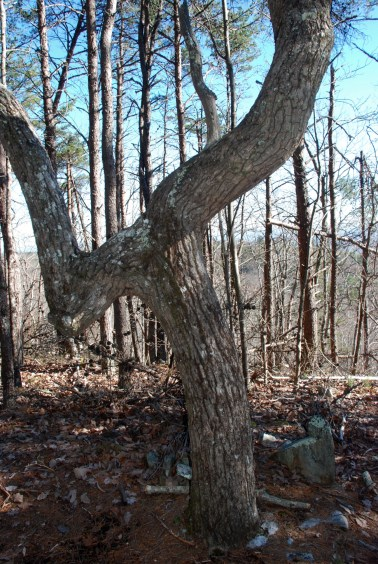 30marker_tree_2