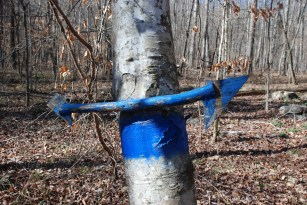 28blue_trail_sign