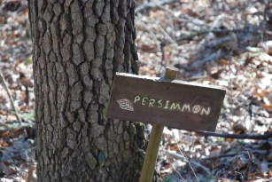 31persimmon_sign