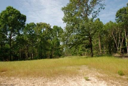 Open grassy area