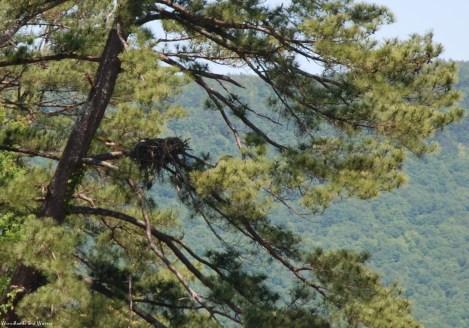 51osprey_nest