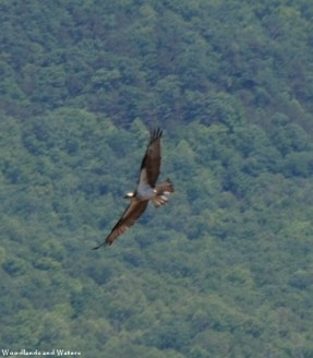 52osprey