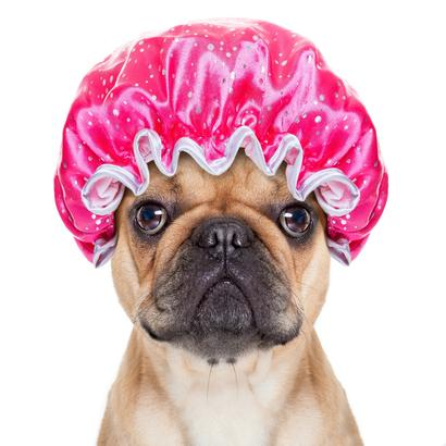 dog grooming in the woodlands tx