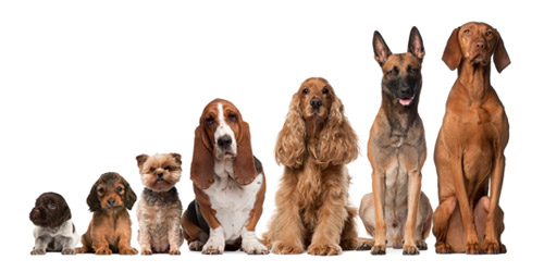 dog grooming the woodlands tx