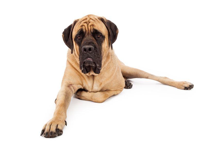 large dog boarding
