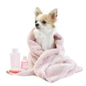 dog groomers houston tx