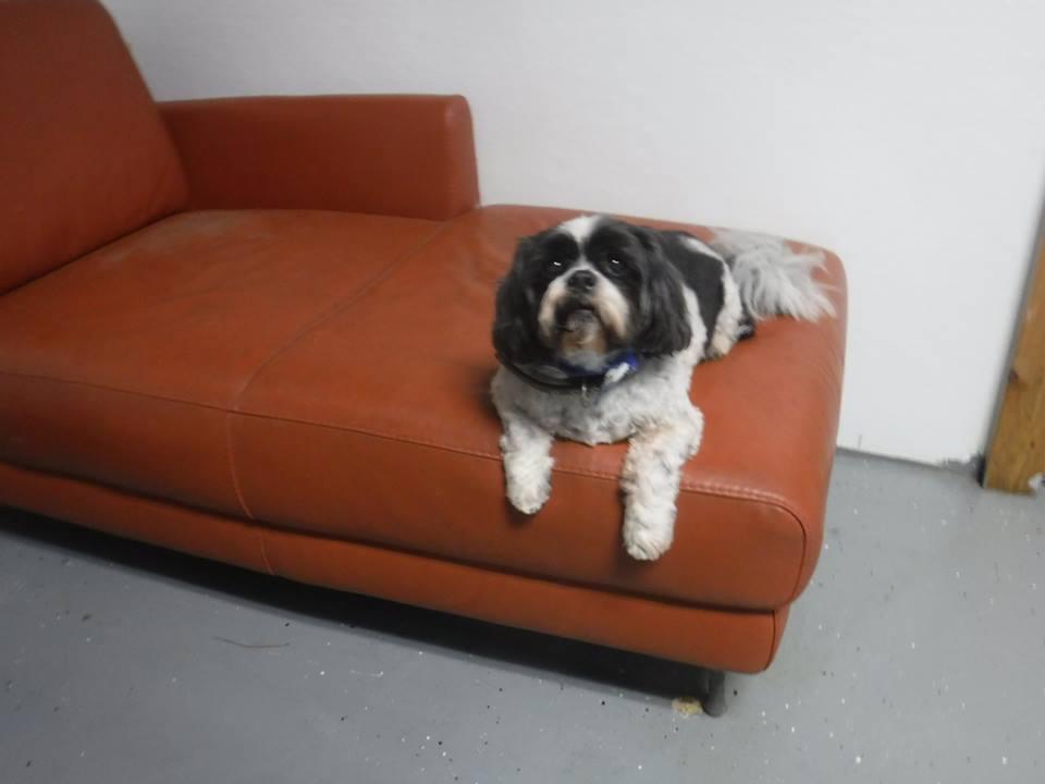 dog hotels in houston