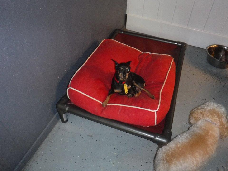best puppy boarding houston