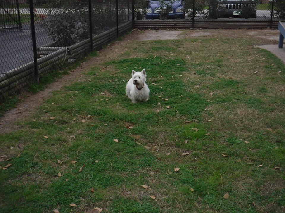 dog boarding in cypress tx