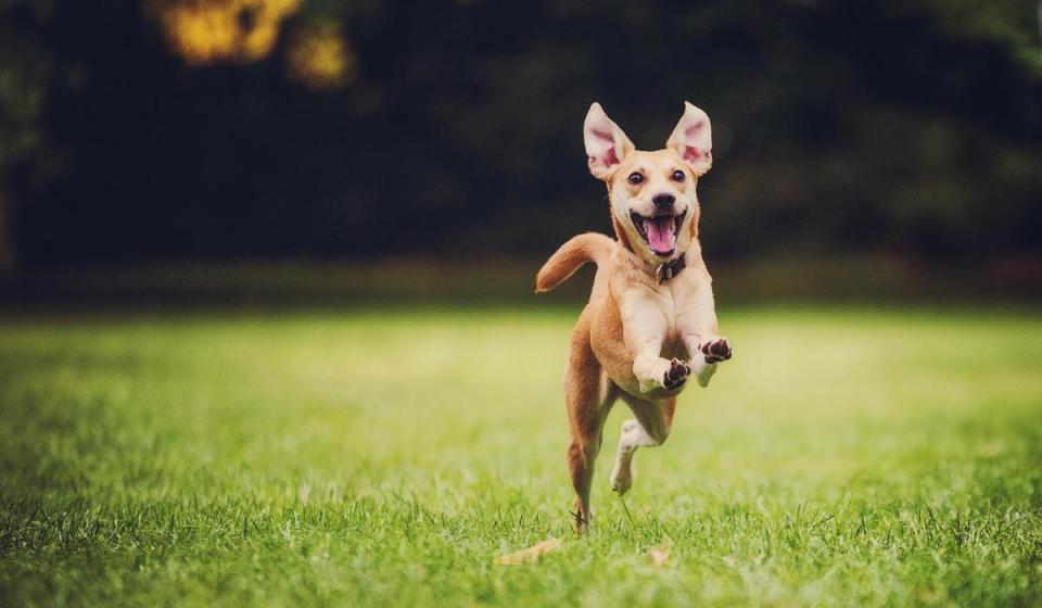 best doggie day care houston tx