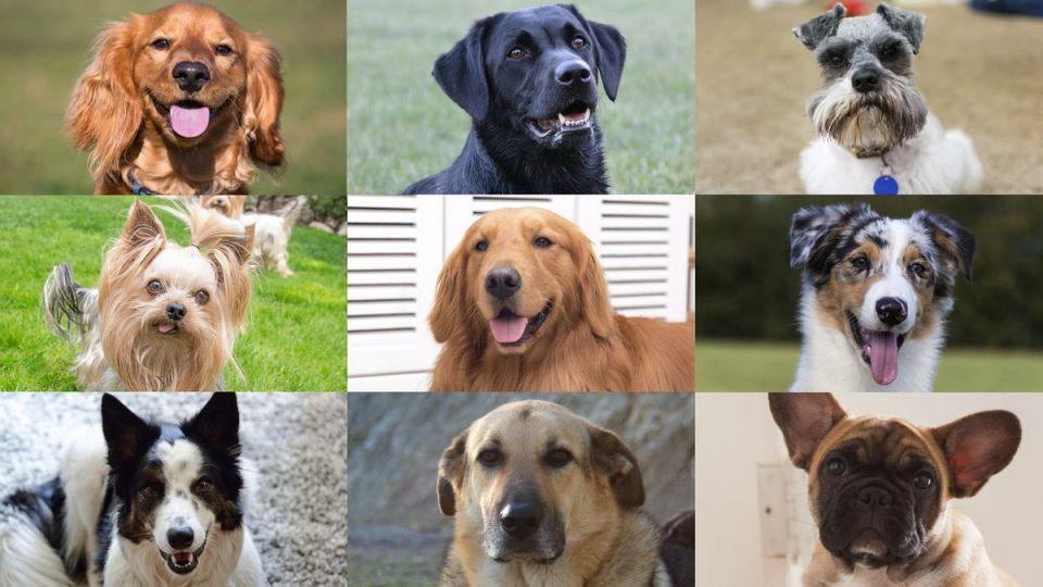 best dog resort houston